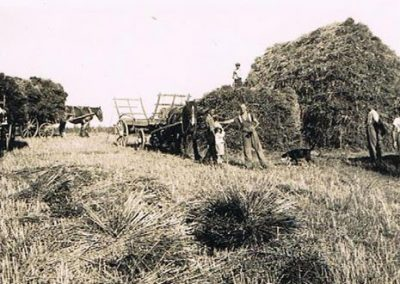 Manor Farm, South Allington, loading corn sheaves on a wagon, Wreford Baker with pony and wagon