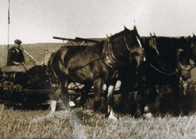 Albert Tabb with Shire horses wartime Rickham Common