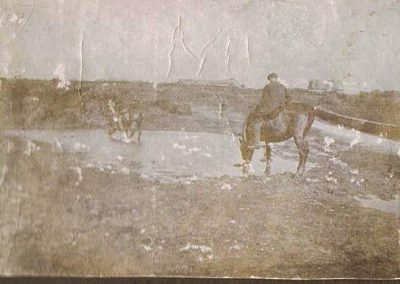 Horses drinking at Moorwell Pond, undated