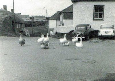 Top of Provi Hill and geese by the Methodist chapel, 1961