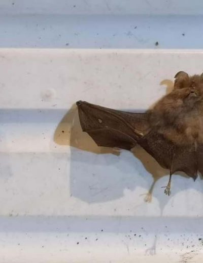 Two Bats (click to see both bats)