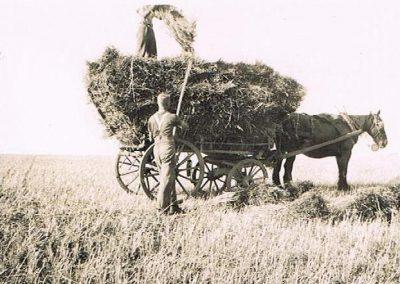Manor Farm gathering hay