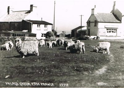 East Prawle village Green with sheep grazing
