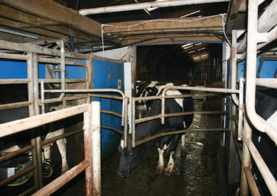 Computerised milking at the Wakeham's parlour Chivelstone