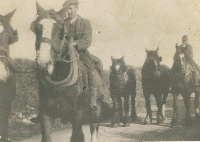 Postcard John Hannaford and his father also called John Hannaford on horseback and leading horses