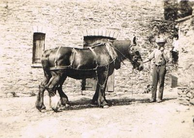 Cart horse at Higher Borough, Geoff Tripp
