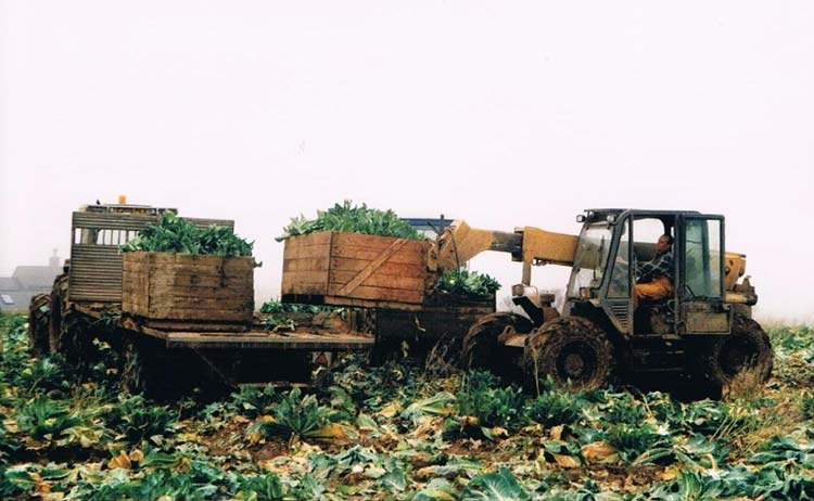 Stephen Tucker loading cauliflowers with tractor and trailer