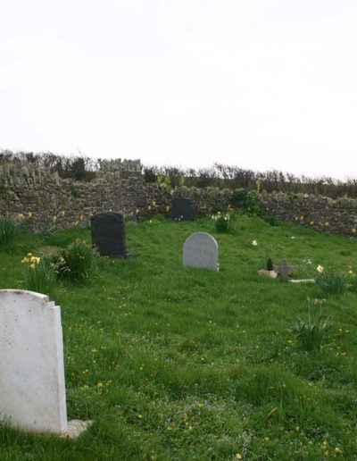Daffodils round the graveyard planted by Jane Bickle